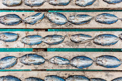 Dried fish on a pier. Arranged in a regular pattern Stock Images