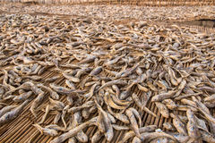 Dried fish preparation Stock Image