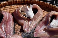 Dried fish. Royalty Free Stock Photo