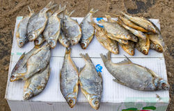 Dried fish ready for sale at the local street market Royalty Free Stock Photos