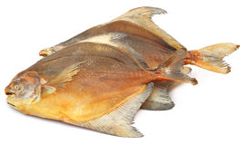 Dried fish Rup chanda Stock Photography