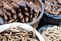 Dried Fish for Sale at Market, Nepal Royalty Free Stock Photography