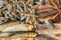 Dried fish-salted fish Stock Photography