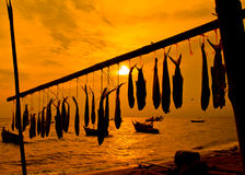 Dried fish at the sea Stock Photography