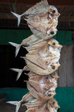 Dried fish, Sulawesi, Indonesia Stock Photos