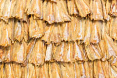 Dried fish in the sun  - Thai food Stock Image