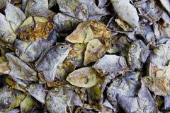 Dried fish Royalty Free Stock Photos