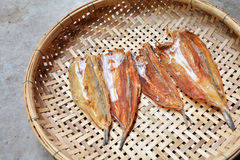 Dried Fish on threshing basket Stock Image