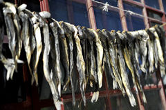 Dried fish. In Tibet, China Royalty Free Stock Photography