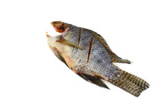 Dried fish Tilapia Stock Images