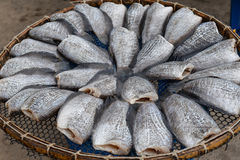 Dried fish. (trichogaster pectoralis), Dry fish out salty for cooking Royalty Free Stock Photos