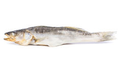 Dried fish walleye Stock Images