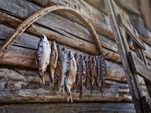 Dried fish. On the wooden background Stock Image