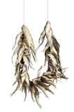 Dried fishes Stock Photography