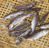 Dried fishes Stock Images