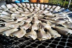 Dried fishes are a circle. How to dried fish by placing fishes are a circle outdoor Royalty Free Stock Photo
