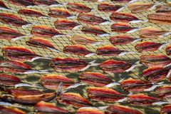 Dried fishes by heat from direct sunlight. Dried fishes by heat from direct sunlight on wired net royalty free stock photos