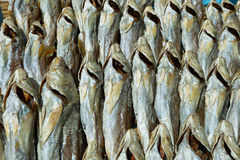 Dried fishes in a market stall of Tai O village Stock Photography
