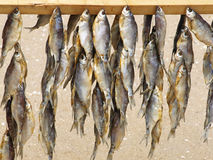 Dried fishes for sale on a summer beach. Stock Photos
