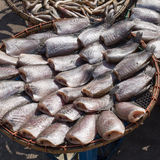 Dried fishs Royalty Free Stock Image