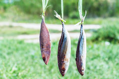 Dried fishs hanging Stock Photo