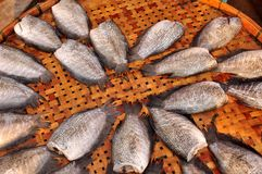 Dried fishs  of local food. In Thailand Stock Photos
