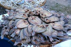 Dried fishs of local food Royalty Free Stock Photos