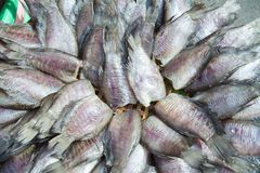 Dried fishs of local food at open market,thailand Stock Image