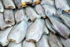 Dried fishs of local food at open market,thailand Royalty Free Stock Photo