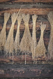 Dried flax. Tied together and hung on the wall Royalty Free Stock Photography