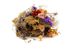 Dried fllowers. Dried flowers isolated on white Royalty Free Stock Image