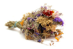 Dried fllowers. Dried flowers isolated on white Royalty Free Stock Photos