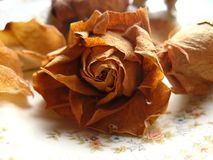 Dried flower. In the soft floral background Stock Photography