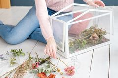 Dried flower arrangement glass box room decor. Creative dried flower arrangement in a glass box. beautiful room decor. woman creating an installation stock photo