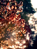 Dried flower with backlit light behind tree background Royalty Free Stock Image