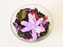 Dried flower in bowl Stock Images