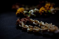 Dried flower garland royalty free stock photo