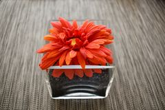Dried flower in a glass pot. Dried Flower on a glass pot, decoration table in the restaurant royalty free stock image