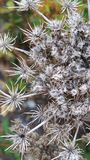 Dried Flower Stock Photography
