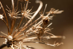 Dried Flower Macro Stock Photo