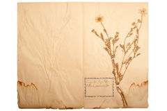 Dried flower on old, gone yellow paper Royalty Free Stock Photo