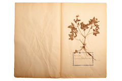 Dried flower on old, gone yellow paper Stock Image