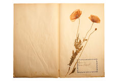 Dried flower on old, gone yellow paper Royalty Free Stock Photography