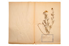 Dried flower on old, gone yellow paper Royalty Free Stock Photos