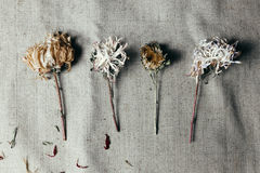 Dried flower over black old sackcloth Stock Photos