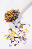 Dried flower petals Royalty Free Stock Photography