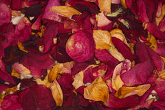 Dried flower petals as background Stock Photography