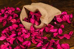 Dried flower petals Royalty Free Stock Photos
