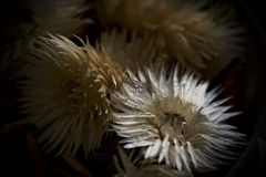Dried flower potpourri Royalty Free Stock Images