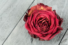 Dried flower of red rose Stock Images
